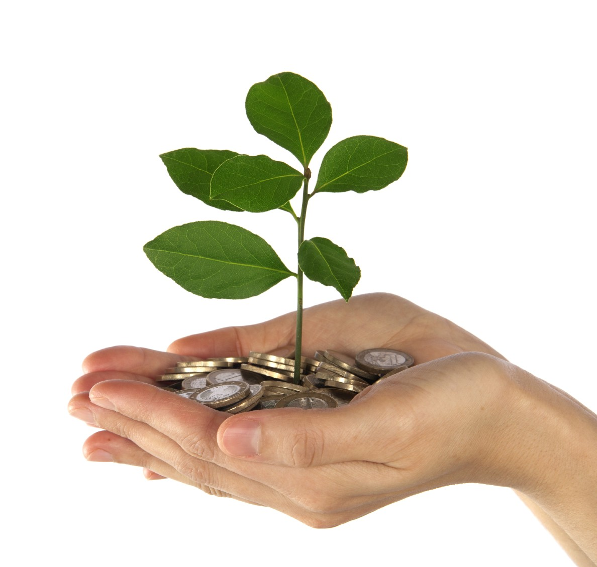 Hands with Coins & Plant
