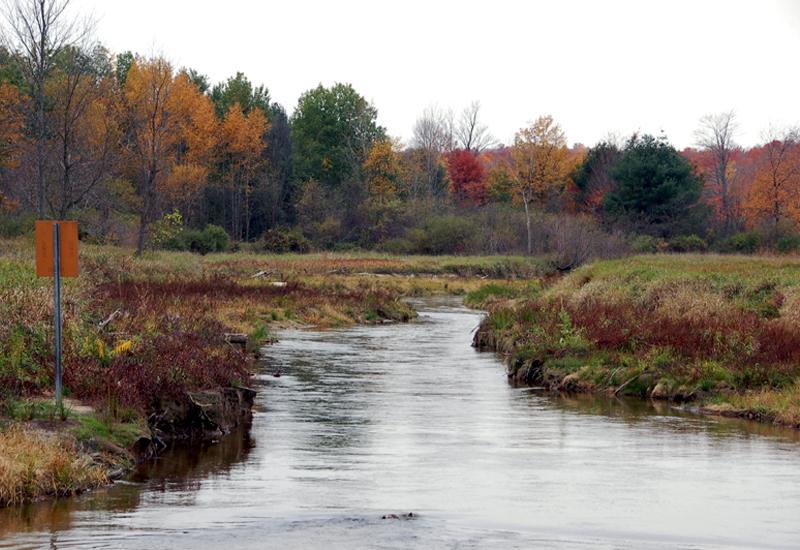 river, autumn trees