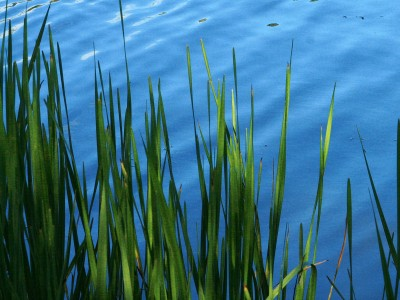 MDEQ launches wetland banking grants and loans