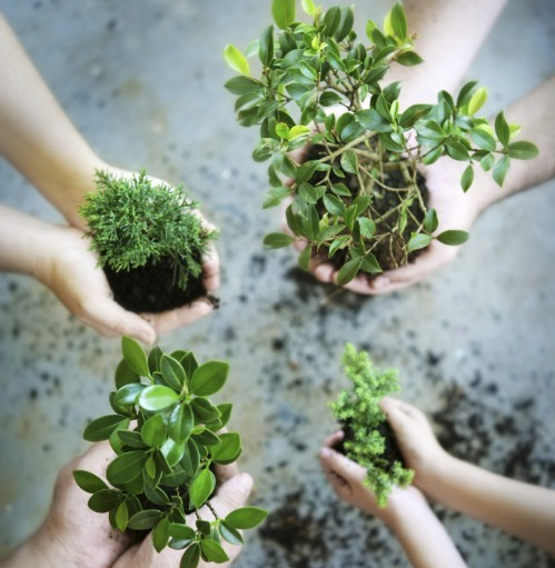 Four pairs of hands holding unpotted plants